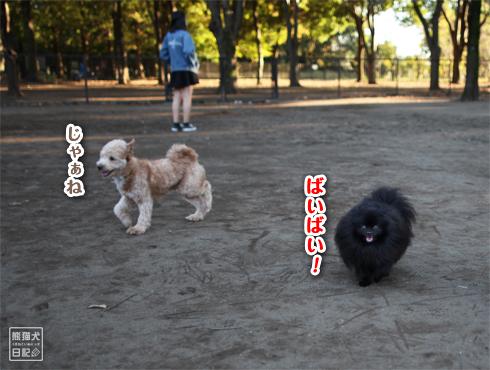 20151113_小金井公園4