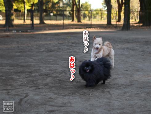 20151113_小金井公園3
