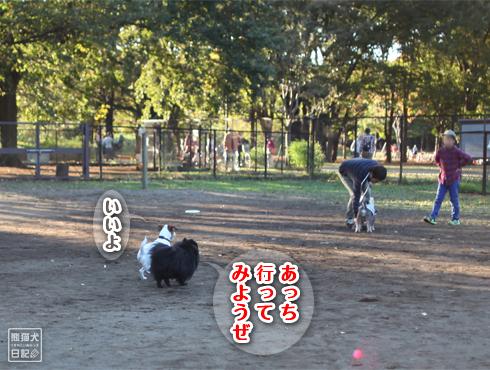 20151113_小金井公園9