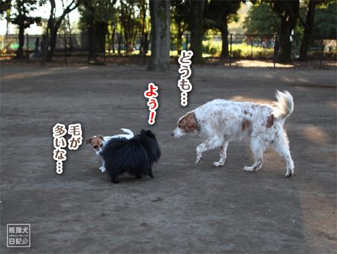 20151113_小金井公園8
