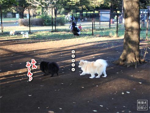 20151115_小型犬用ドッグラン4