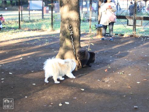 20151115_小型犬用ドッグラン3