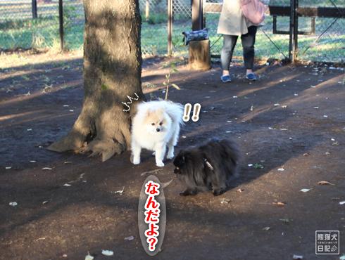 20151115_小型犬用ドッグラン2