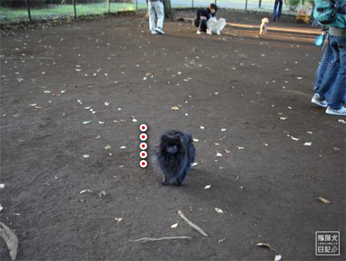 20151115_小型犬用ドッグラン8