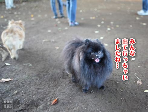 20151115_小型犬用ドッグラン7