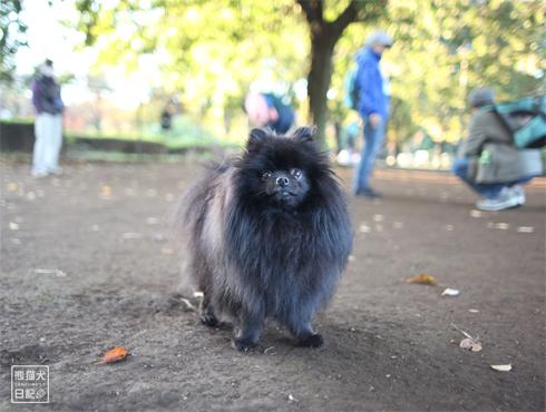 20151115_小型犬用ドッグラン10