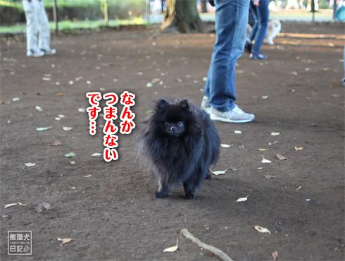 20151115_小型犬用ドッグラン9
