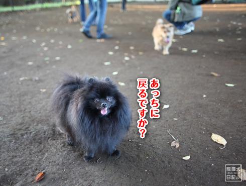 20151115_小型犬用ドッグラン11