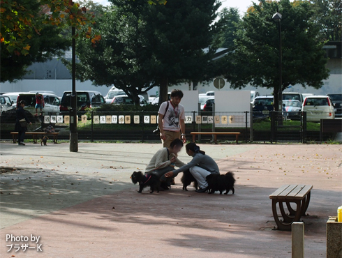 20151122_駒沢公園6