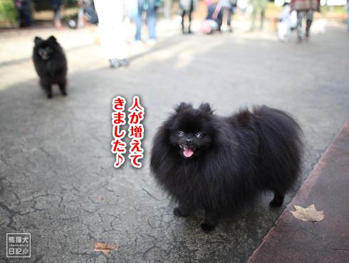 20151125_駒沢公園8