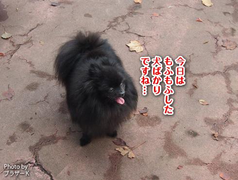 20151127_駒沢公園10