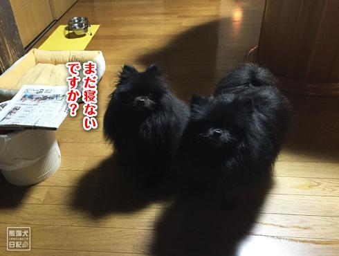 20151201_志熊と真熊8