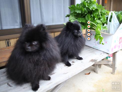 20151208_真熊と志熊3