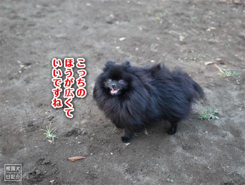 20151210_小金井公園2