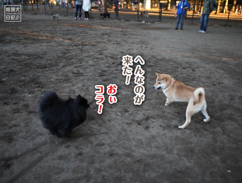 20151210_小金井公園8