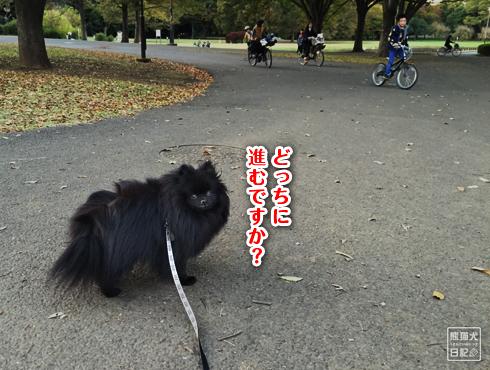 20151211_さよなら小金井公園10