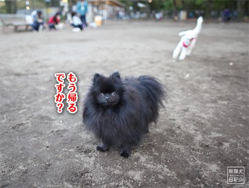 20151211_さよなら小金井公園9