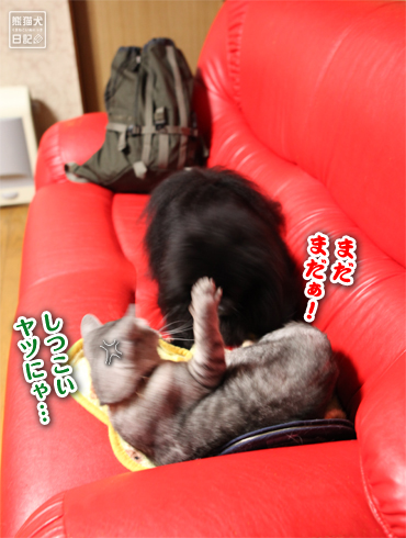 20151214_動物たち4