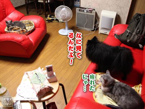 20151214_動物たち7