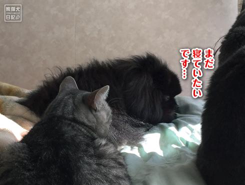 20160203_ぽかぽか6