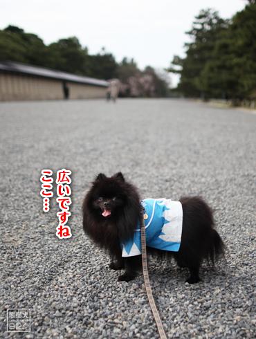 20160407_真熊5