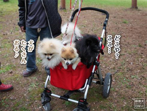 20160413_関西犬たち3