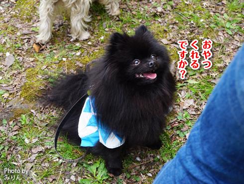 20160413_関西犬たち10