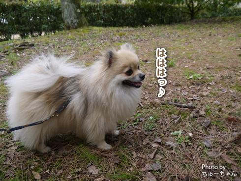 20160413_関西犬たち6