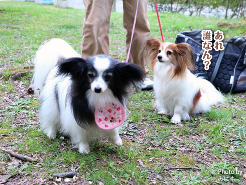 20160413_関西犬たち12