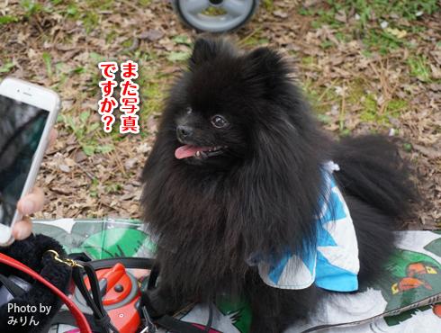 20160413_関西犬たち11