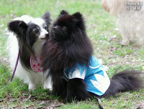 20160414_関西犬たち後編10