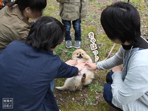 20160414_関西犬たち後編8