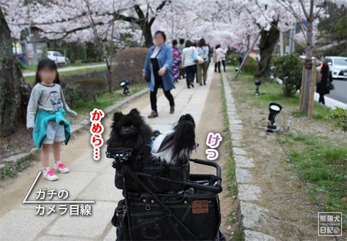 20160418_桜スポット8