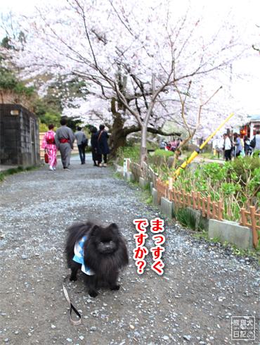 20160421_さよなら京都4