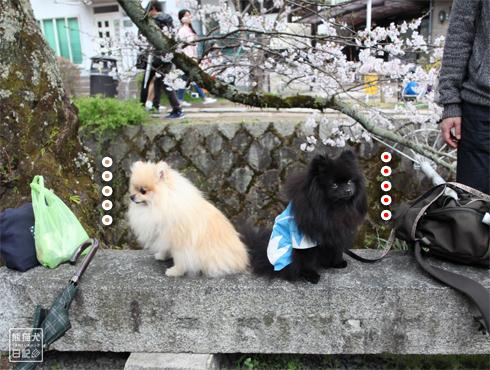 20160421_さよなら京都2
