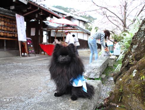 20160421_さよなら京都1