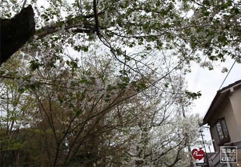 20160421_さよなら京都6