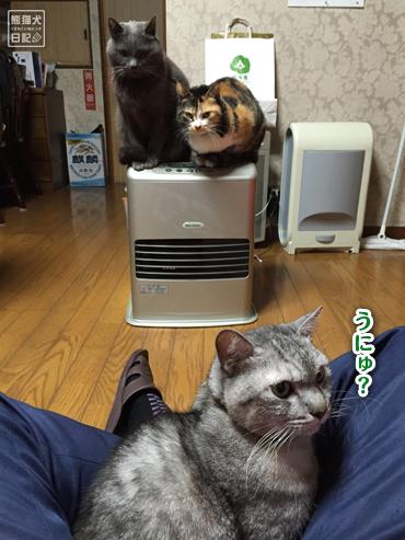 20160424_猫たち5