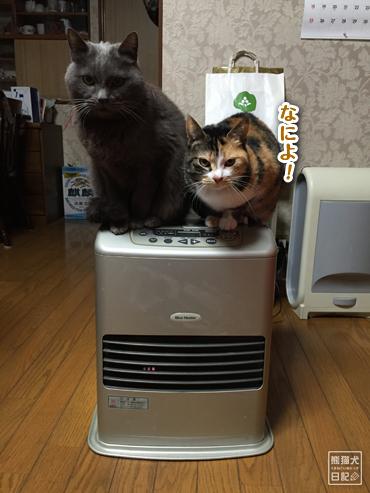 20160424_猫たち4