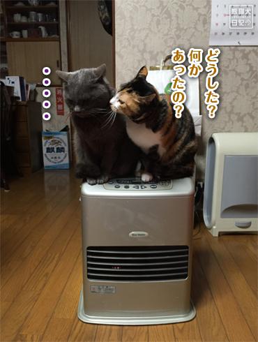 20160424_猫たち3