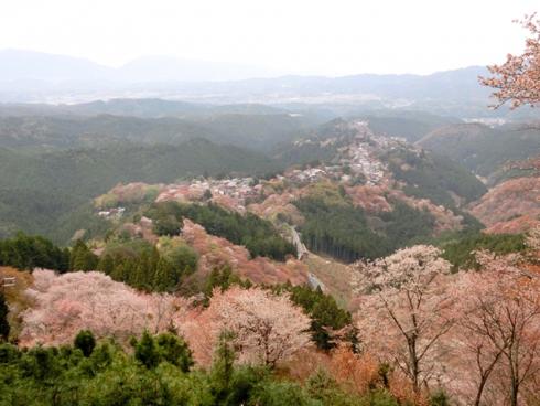 20160426_吉野の桜1