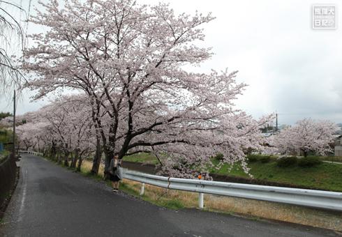20160426_奈良の桜7