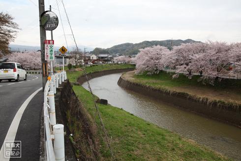 20160426_奈良の桜12