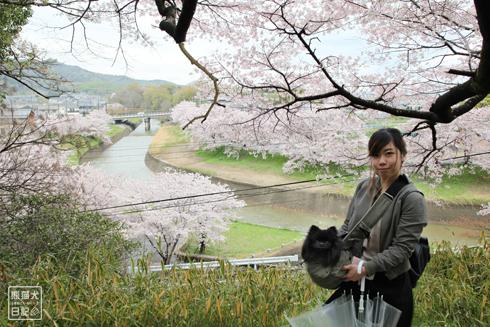 20160426_奈良の桜14