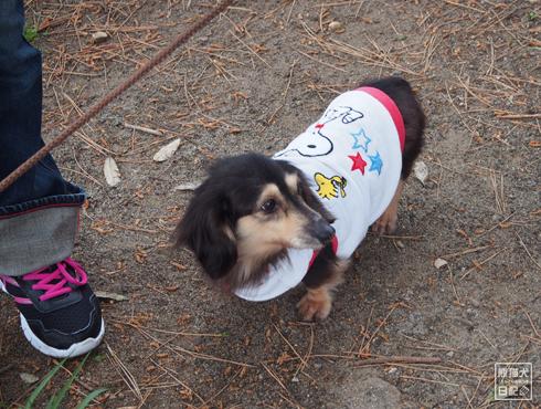 20160615_犬たち10