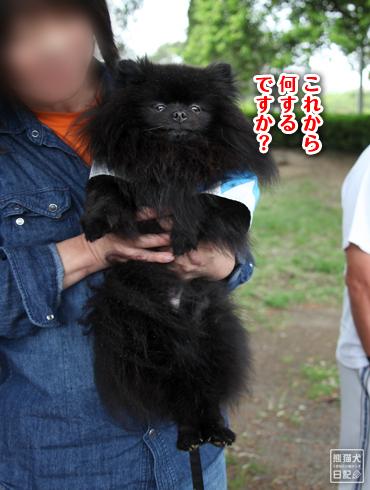 20160615_犬たち6