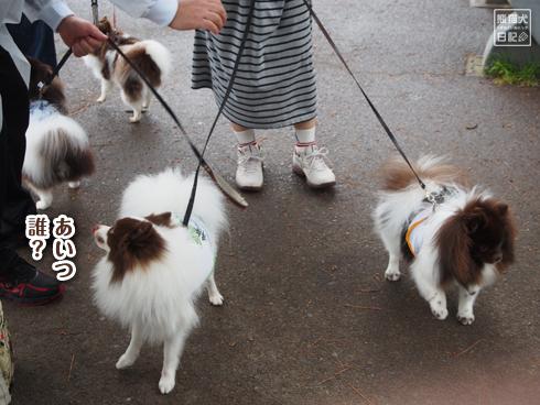20160615_犬たち14