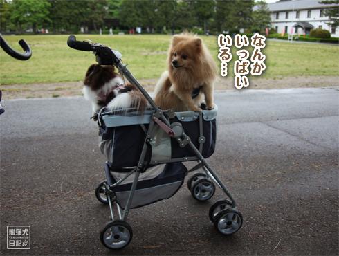 20160615_犬たち11