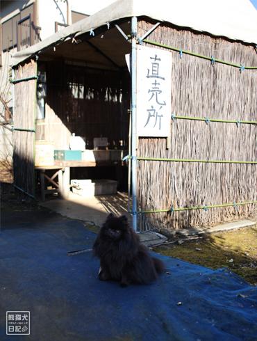 20161208_近所の散歩6