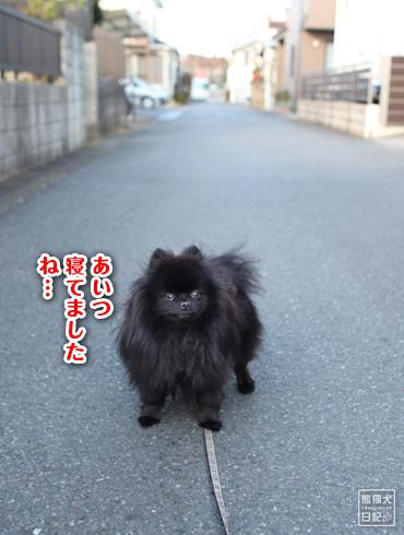 20161215_近所の猫8